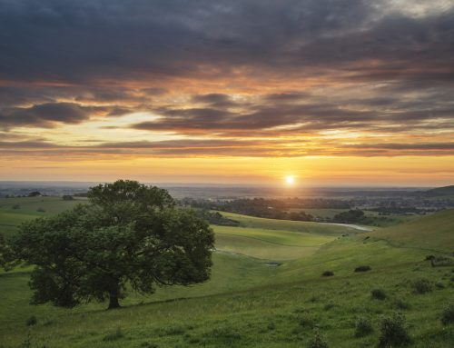 Explore West Sussex from your Raylands Holiday Home